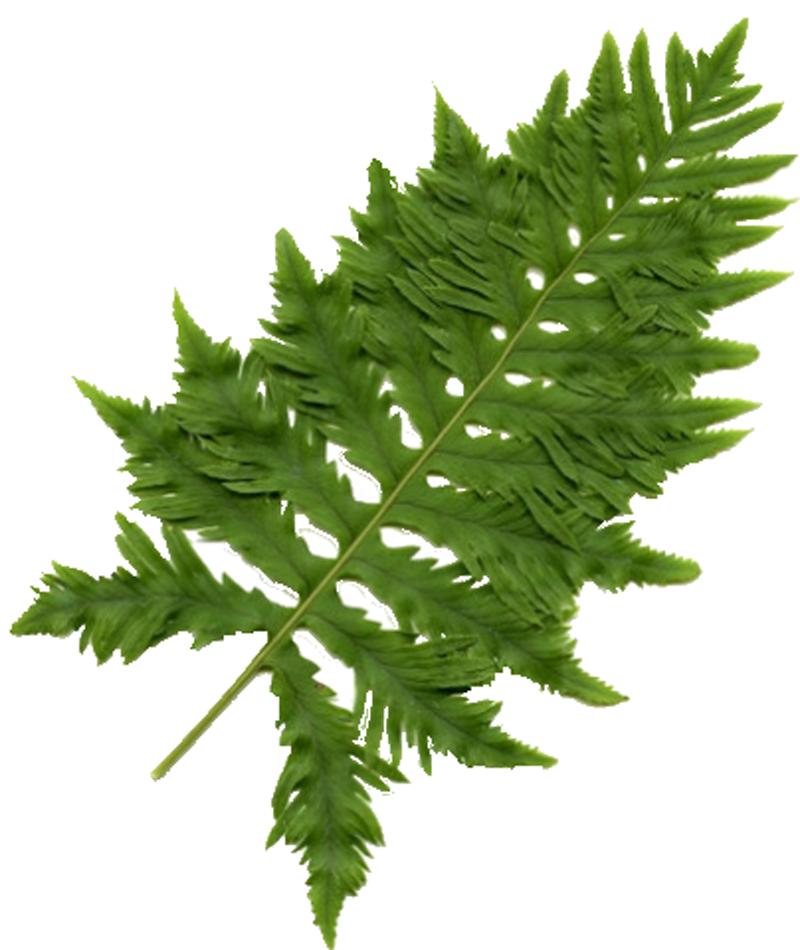 fernblock - serina sun
