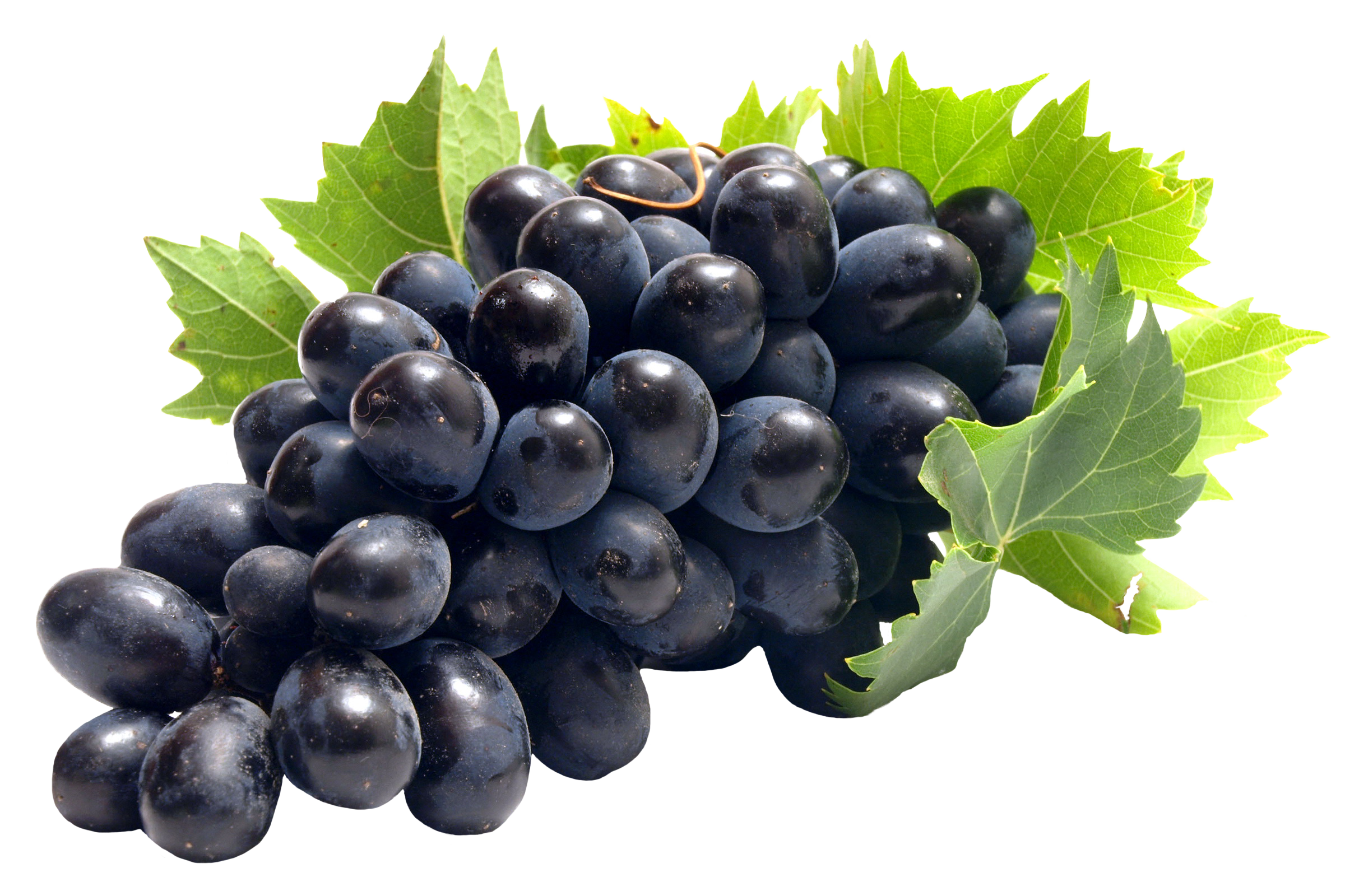 grape seed extract - serina sun